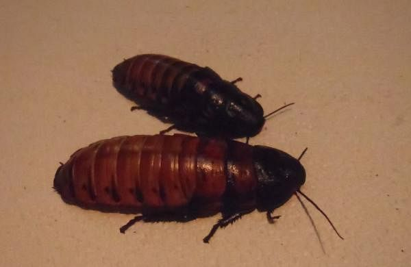 Mn heath laws living with cockroaches